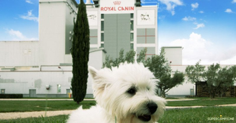 Supercampione - Royal Canin: vinci gratis un weekend a Montpellier
