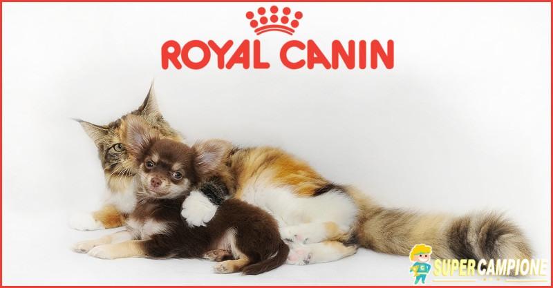Supercampione - Vinci gratis una fornitura Royal Canin per un anno