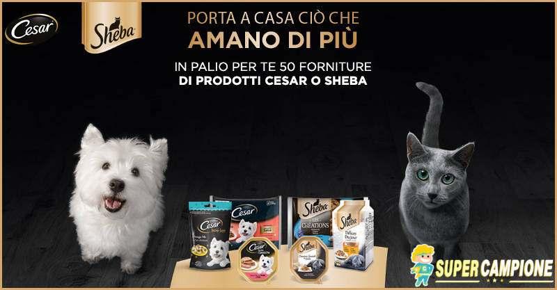 Vinci 50 forniture per cane o gatto Cesar o Sheba