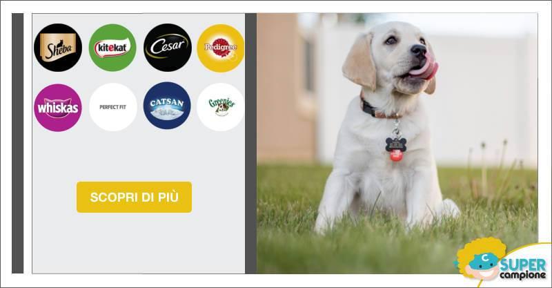 Vinci 100 medagliette personalizzate cane e gatto