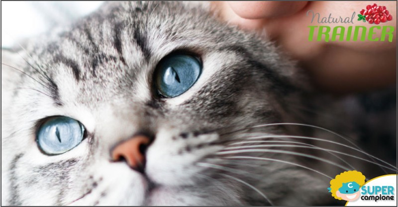 Trainer: vinci gratis uno shooting e forniture di crocchette per gatti